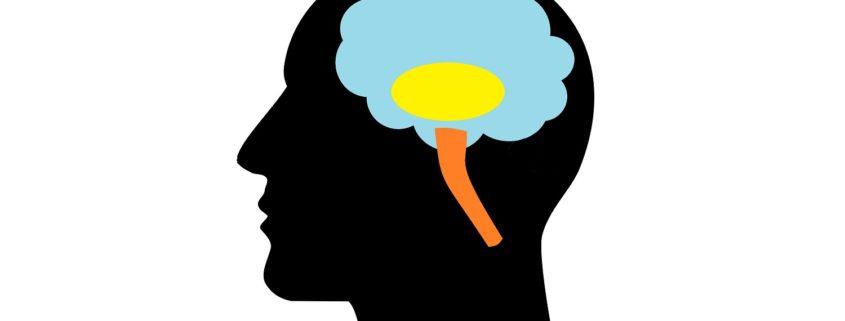 Neuromarketing: i tre cervelli